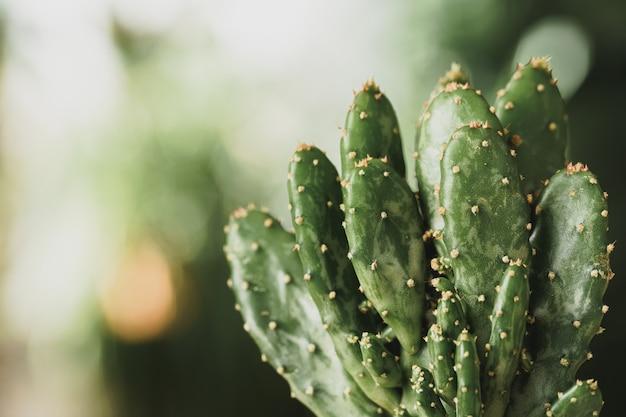Mini-kaktuspflanze, die auf unscharfen botanischen gartenhintergrund vergossen wird
