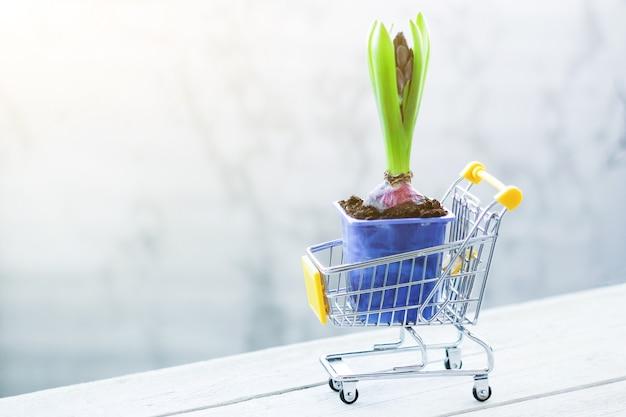 Miniatur-einkaufswagen mit frühlingskauf von giacinth