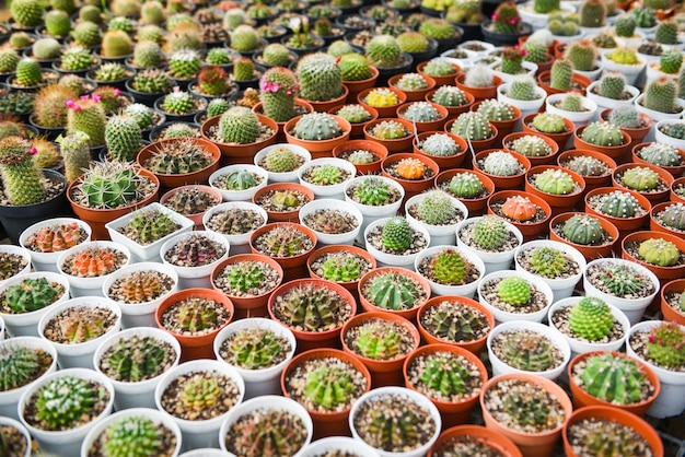 Miniatur-kaktustopf im garten dekorieren - verschiedene arten schöner kaktusmarkt oder kaktusfarm