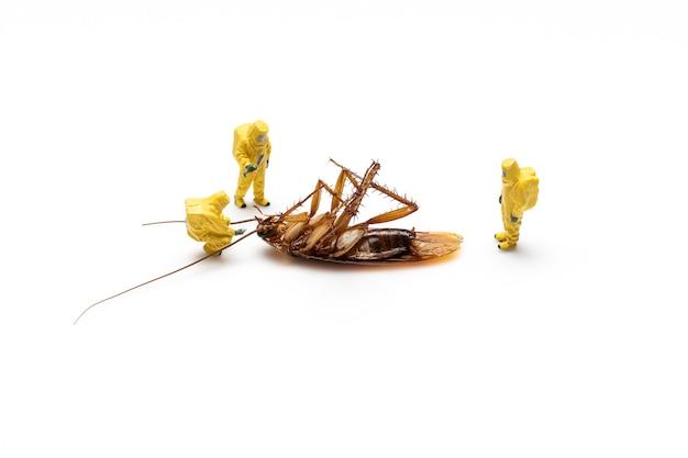 Miniaturleute mit toter schabe auf einem weißen hintergrund.