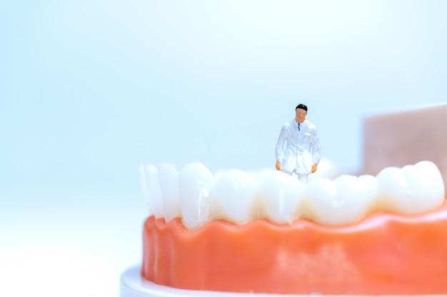 Miniaturzahnarzt, der menschliche zähne mit zahnfleisch beobachtet und diskutiert