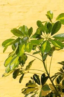 Minimale anordnung der natürlichen pflanze