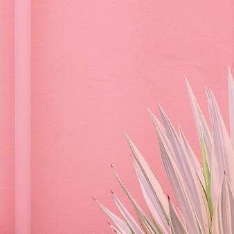 Minimale modepflanzen auf rosa design. aloe-liebhaber. kanarische insel