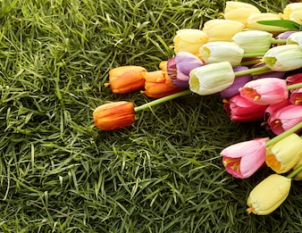 Minimale Ostern-Frühlings-Ebenenlage