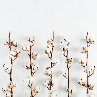 Minimale rohbaumwollzweige auf weißem hintergrund. flache lage, ansicht von oben