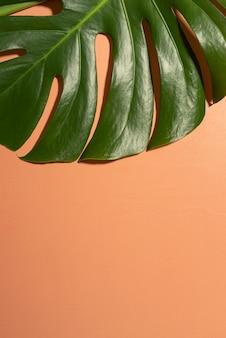 Minimale tropische blattanordnung