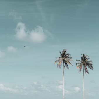 Minimale tropische kokospalme im sommer mit himmelhintergrund.