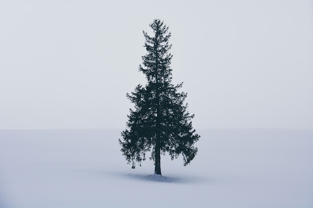 Minimale winterlandschaft, einzelner fichtenbaum auf schneebedecktem hügel während schneefall am wintertag, kopienraum, weihnachtsbaum bei biei, hokkaido, japan
