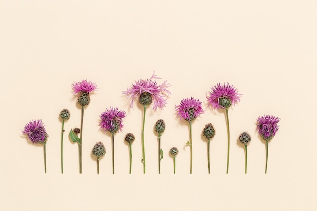 Minimaler natürlicher blumenhintergrund mit sommerwildblumen und -gras botanischem muster