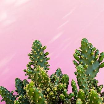 Minimales sortiment an natürlichen pflanzen