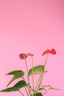 Minimales tropisches pflanzensortiment