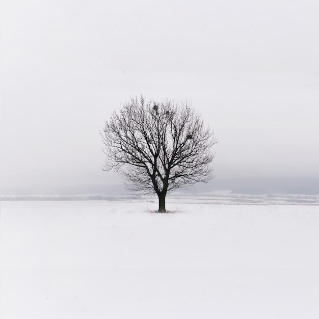 Minimalismus. einsamer baum auf dem feld. winter