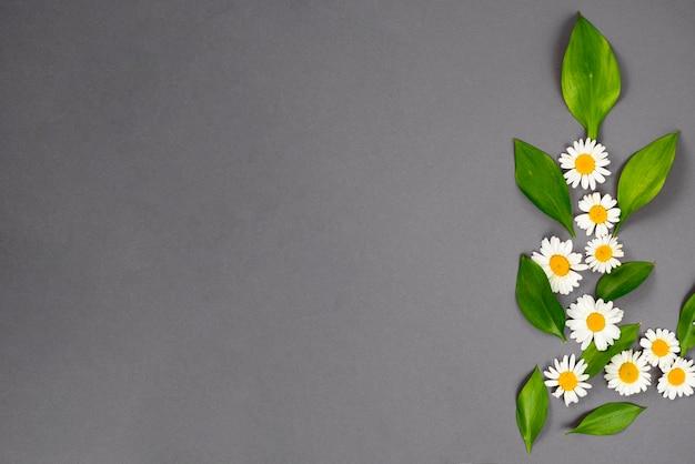 Minimalistic gänseblümchenmuster mit blättern Kostenlose Fotos