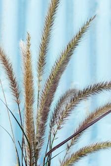 Minimalistische anordnung natürlicher pflanzen