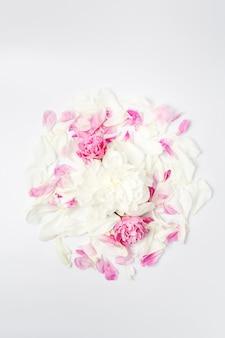 Minimalistische helle blumenzusammensetzung. weiße und rosa pfingstrosenblüten und blütenblätter verstreut auf weißer oberfläche, draufsicht flach liegen.
