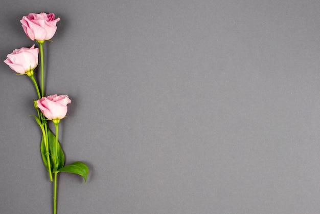 Minimalistische rosa pastellblumen Kostenlose Fotos