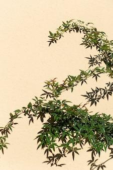 Minimalistische zusammensetzung der natürlichen pflanze
