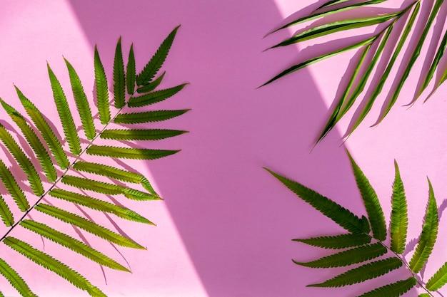 Minimalistischer hintergrund im sommerstil. palmblätter auf rosa papier