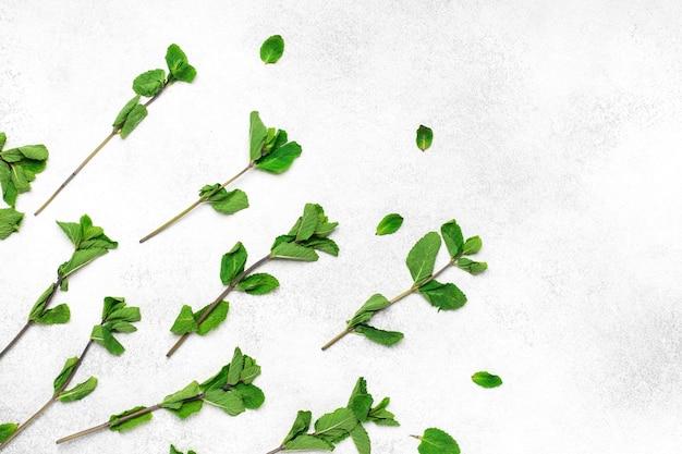 Minzblätter auf weißem hintergrund, nahaufnahme