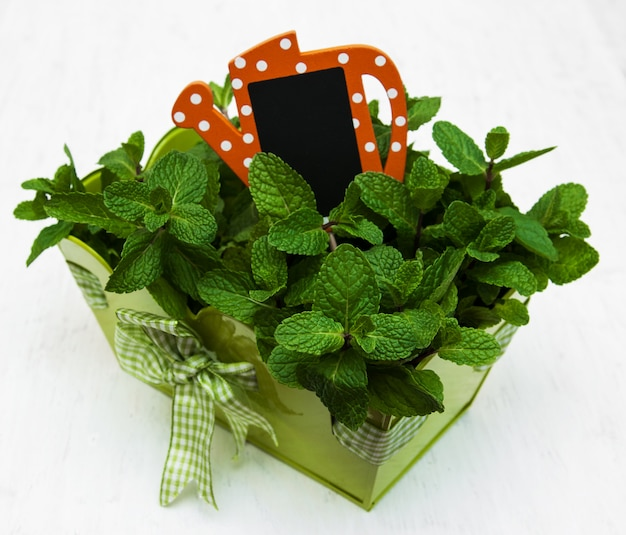 Minze in einem grünen topf