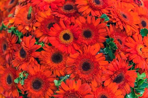 Mischhochzeitsblume, multi farbiger blumenhintergrund