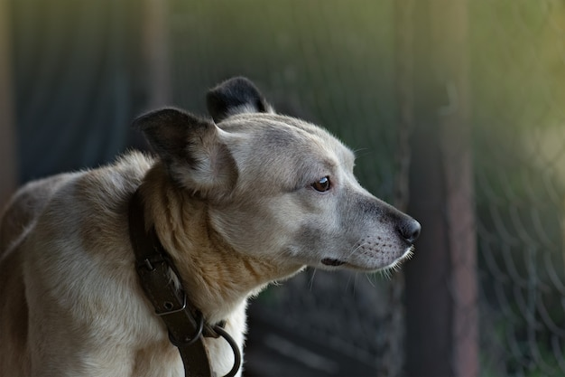 Mischlingshund mit riesigen traurigen augen