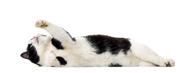 Mischlingskatze, die auf seite isoliert liegt