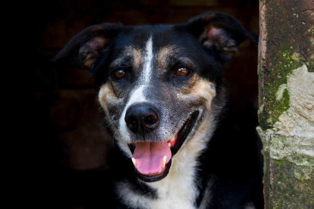 Mischlingsstreunender hund des porträts auf dunklem hintergrund