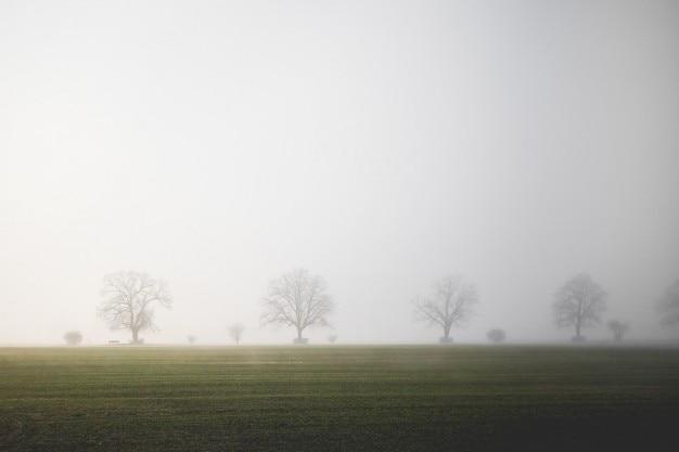Mistful horizont und bäume
