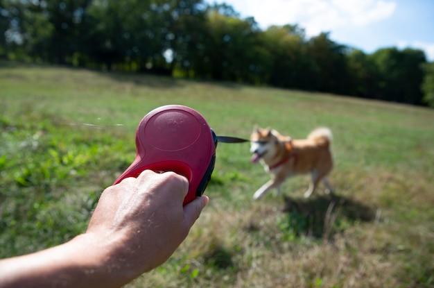 Mit einem hund spazieren gehen