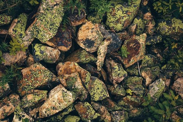 Mit moosen und flechten bedeckte strukturierte steine sind chaotisch verstreut.