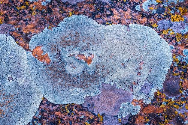 Mit pilzen bedecktes betonfragment als hintergrundtextur