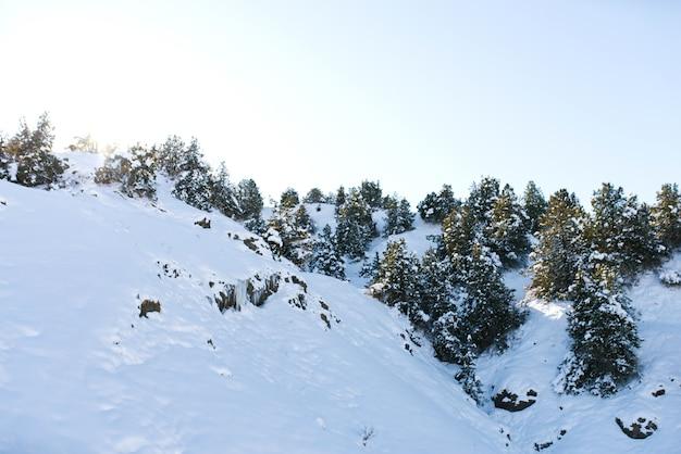 Mit schnee und wald bedeckte hügel