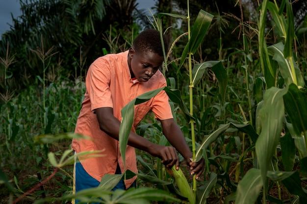 Mittelgroßer junge, der im maisfeld arbeitet