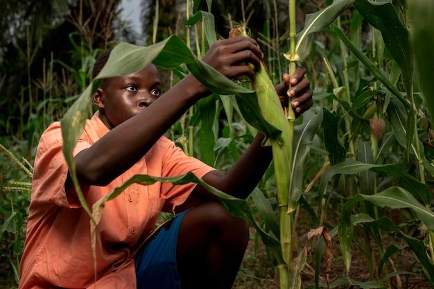 Mittelgroßes kind, das im maisfeld arbeitet
