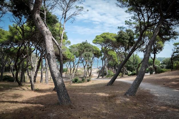 Mittelmeerküste bei hyères im sommer in frankreich