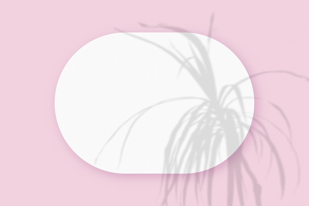 Modell mit pflanzenschatten überlagert auf einem ovalen blatt strukturierten weißen papiers auf einem rosafarbenen tischhintergrund. horizontale ausrichtung.