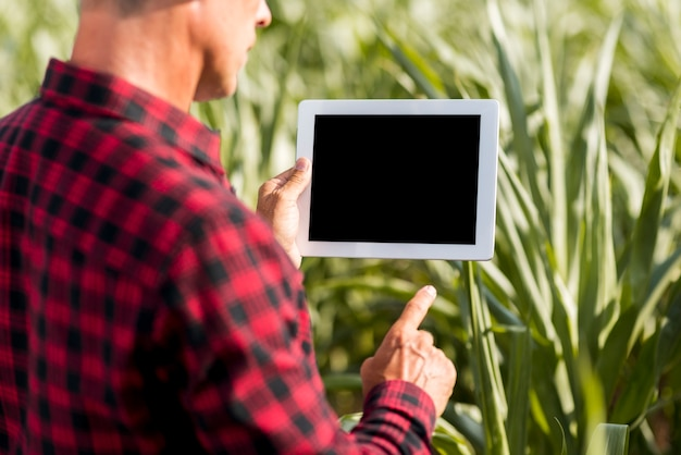 Modelllandwirt mit einer tablette auf einem maisgebiet
