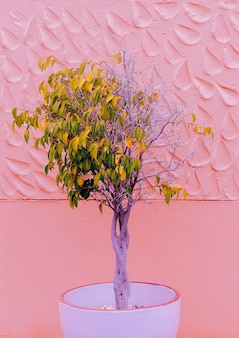 Modepflanzen auf rosa design. baum. kanarische natur