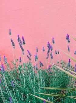 Modepflanzen auf rosa design. blumen kanarische insel