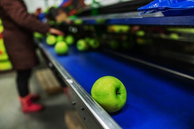 Moderne technologie für produktion, sortierung und verteilung von äpfeln. reife grüne äpfel frisch gewaschen im fokus. trocknen und sortieren von äpfeln nach dem reinigen der äpfel in sauberem wasser. arbeiter im hintergrund