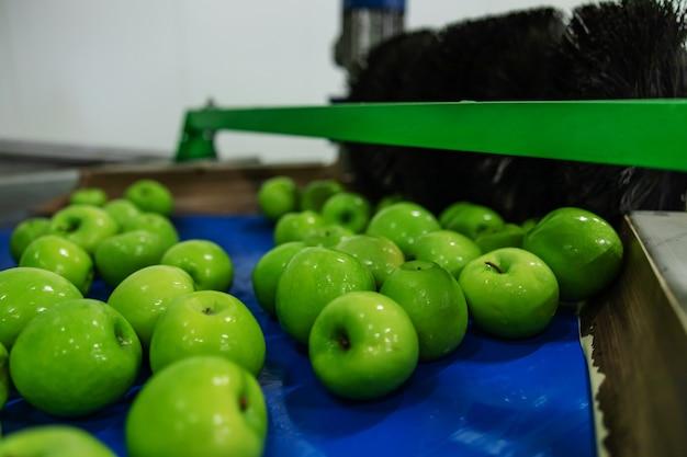 Moderne technologie zur herstellung, sortierung und verteilung von äpfeln. reife grüne äpfel frisch im fokus gewaschen. trocknen und sortieren von äpfeln nach dem reinigen von äpfeln in sauberem wasser. fruchtqualitätskontrolle