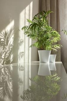 Moderner öko-innenraum mit glänzender schreibtischoberfläche mit schatten und reflexionen von natürlichen grünen zimmerpflanzen in den blumentöpfen. schattenspiel an einer wand aus dem fenster am sonnigen tag.