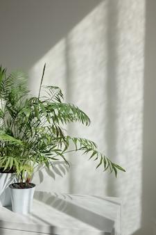 Moderner öko-innenraum mit stilvollem schreibtisch und natürlicher grüner zimmerpflanze in den blumentöpfen gegen helle wand mit schatten aus dem fenster an einem sonnigen tag, kopienraum. öko-arbeitsplatz.