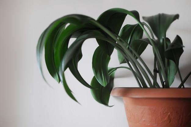 Modernes, sauberes interieur mit eucharis-heimpflanze heimpflanze auf hellem hintergrund
