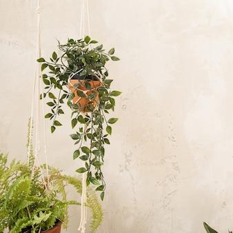 Modernes wohndesign im boho-stil. hauptpflanze im blumentopf gegen betonwand.