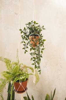 Modernes wohndesign im boho-stil. hauptpflanzen in blumentöpfen gegen betonwand.