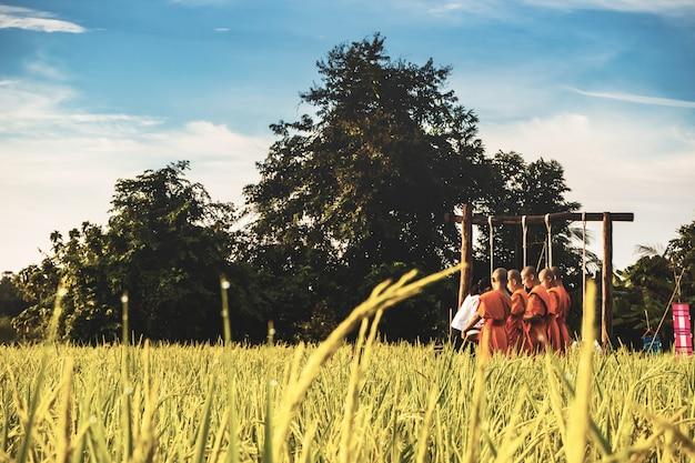 Mönch mit paddy-reisfeld in thailand