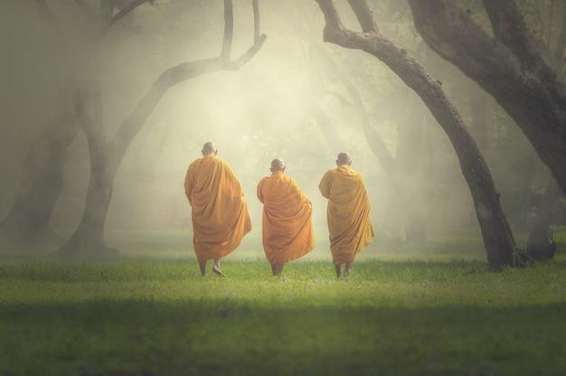 Mönche wandern in tiefen wald, buddha religion konzept