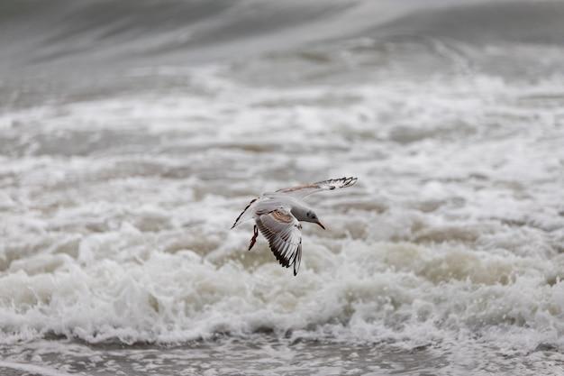 Möwe am strand im flug